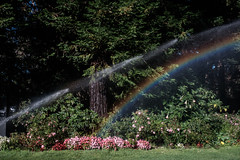 fees whiffletrees (bhautik joshi) Tags: goldengatepark bhautikjoshi bayarea california sanfrancisco sfist sf sprinkler rainbow unitedstates us