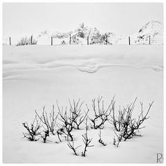 Winter coronation (vandrende) Tags: lofoten myrland nor nordland bw landscape landskap nb norge norvege norway paysage svarthvit