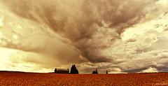 Migrants (p hakala p) Tags: migrants birds gooses goose wedgeofgoose wedge barn sky storm endofsummer halikko salo salonseutu suomi finland autumn birdsmoving fields wheat