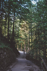 through the deep dark wood. (Nicole Favero) Tags: rosso neuschwanstein neuschwansteincastle nikon d5000 camera love amazing mine cute awesome forever focus cool crazy bridge nicolefavero photography travel explore throwback germany france places vertical tumblr vintage nature woods adventure