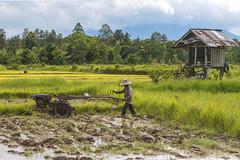 ChiangRai_2684 (JCS75) Tags: asia asie thailand thailande canon chiangrai
