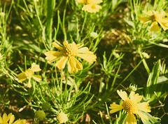 Beauty Among Weeds (geekknot) Tags: 365
