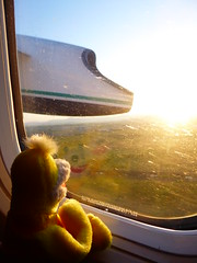 Leaving for Istanbul with Swami (ashabot) Tags: swami yellow travel travelingcompanion