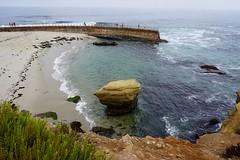 Children's Pool, La Jolla ((Jessica)) Tags: pw sealion california ocean beach sandiego lajolla seal childrenspool