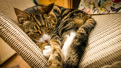"""""""Comfort ye..."""" (grahamrobb888) Tags: oscar cat pet snooze paws purr conservatory"""