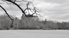 frozen central park in new york (norlandcruz74) Tags: 2015 march norland cruz pinoy filipino nyc central park new york city nikon d5100 dx