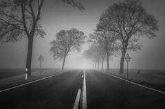 Road to nowhere III (Jaques10000) Tags: nikon d5100 havelland brandenburg landscape landschaft monochrome morning trees fog blackwhite
