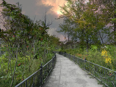 Schiarimento (Zingarella1) Tags: sky clouds darkness path trees leaves