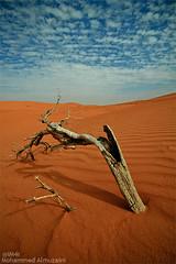 (Mohammed Almuzaini   ) Tags: man beautiful night canon wonderful is google nice nikon flickr day desert explorer flash wide sigma mohammed sands lenses abdullah                      muzaini