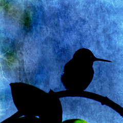 stillness (1crzqbn) Tags: color nature reflections square hummingbird naturallight textures 7d ie stillness hypothetical hss vividimagination artdigital trolled awardtree magicunicornverybest magicunicornmasterpiece 1crzqbn sliderssunday galleryoffantasticshots 50522012