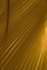 Diagonalis (TJ.Photography) Tags: shadow abstract texture lamp lines pattern diagonal shade abstraction straight repetitive