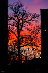 multicolore [Explore] (miglio) Tags: sunset usa chicago america illinois tramonto roadtrip explore 7d coasttocoast explored canoneos7d