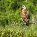 Varietà di uccelli tra Lorica e Monteria