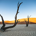"Deadvlei Sossusvlei Namibia • <a style=""font-size:0.8em;"" href=""https://www.flickr.com/photos/21540187@N07/8291682651/"" target=""_blank"">View on Flickr</a>"