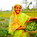 Bangladesh - Microfinance for Marginal and Small Farmers Project - May 2011