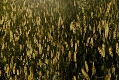 Lungo il Sentiero (Davide'70) Tags: sunset sentiero piante valtellina