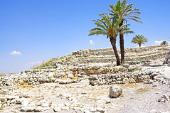 Palm Trees among the remains of Megiddo (Ben Unleashed!) Tags: archaeology israel palmtree megiddo telmegiddo pentaxkr