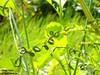 Nature's Style... (Raj Says) Tags: green leaf flickr jabalpur rituraj flickrduel rajsays flickrrajsays naturesstyle