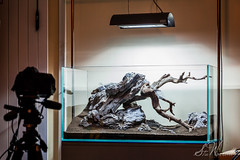 New 90x45x45cm aquascape design (Stu Worrall Photography) Tags: wood stone aquarium ada manzanita aquascape tropica hardscape aquascaping manzi 90p solar1 sieryu 90x45x45cm