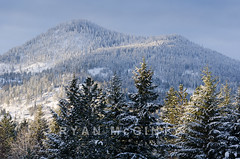 Huckleberry Mountain, Idaho (Ryan McGinty) Tags: winter usa snow landscape boxingday idaho evergreens cocolalla huckleberrymountain ryanmcginty