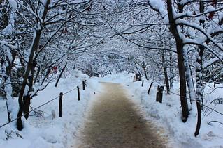 Curry Village Winter Wonderland