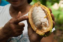 Inside El Cacao (Azalia Daniela) Tags: woman fruit mujer chocolate venezuela negro fruta miranda dedo chocolat 2012 blackwoman cacao birongo pulpa sealamiento amarilo apunta cacaobean dedondice edomiranda mujernegra