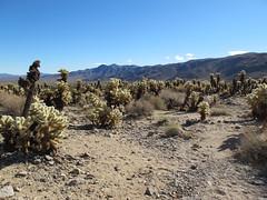 Joshua Tree National Park (saguarostrength) Tags: california palmsprings joshuatree joshuatreenationalpark