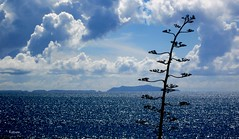 """""""Bali Ha'i will whisper on the wind of the sea......"""" Channel Islands, Ventura Coast, CA. Panorama by Ross Care (BudCat14/Ross) Tags: california clouds pacificocean thesea nuages channelislands lamer dasmeer venturaca"""