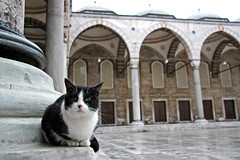 A cat in the Blue Mosque, Istanbul, Turkey (inchiki tour) Tags: world travel blue heritage architecture cat turkey photo islam istanbul mosque ottoman       sultanahmed