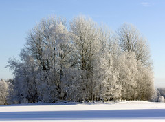 Rimfrost (Steffe) Tags: trees winter snow cold frost hoarfrost rimfrost softrime
