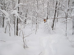 Bonne femme de neige (Alex L'aventurier,) Tags: winter orange white mountain snow canada storm cold forest snowshoe quebec hiver country qubec neige campagne blanc froid sentier fort raquette tempte lacetchemin