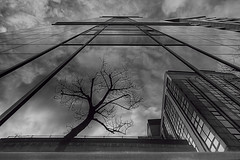 """Reflected limbs • <a style=""""font-size:0.8em;"""" href=""""http://www.flickr.com/photos/76512404@N00/8425613847/"""" target=""""_blank"""">View on Flickr</a>"""