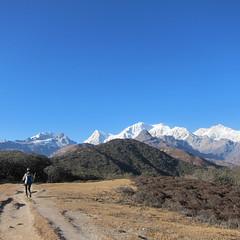 On the way to Dzongri (3)