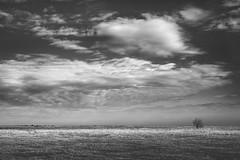 Radiša Živković - Morning note II (Radisa Zivkovic) Tags: morning winter light shadow blackandwhite sunlight tree grass clouds fleurs landscape dawn nikon scenery europe serbia lonely et plain paysages vastness vojvodina banat