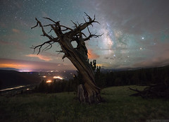 Silent Night (Erik Johnson Photography) Tags: alma colorado windy ridge mt bross night sky timelapse bristlecone pine tree lone dark long exposure stars astrophotography astrophoto city lights clouds flowers tundra elevated national geographic creative
