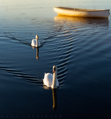 Delta Squadron [Explored] (buddsnax) Tags: swans reflections loch lochrusky scotland boat fishing sunrise uk