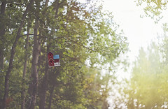 vacation home (rockinmonique) Tags: helios442 trees leaves birdhouse light green yellow red bokeh swrily moniquew canon copyright2016moniquewphotography