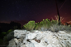 Trans Pecos Copperhead (Agkistrodon contortrix pictigaster) (Saundersdrukk) Tags: snake copperhead stars astrophotography