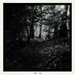Emergence (Creepella Gruesome) Tags: iphone6splus hipstamatic nature woods trees trail dark light squareformat spooky mysterious phantasm