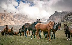 Kyrgysztan-6904-6 (EbE_inspiration) Tags: kyrgyzstan nikon nikond7100 world outside horse horses brown green