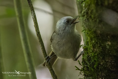 NZE_5447 (NZ Exposed Photography by Chris Helliwell) Tags: zealandia newzealand nature nzexposed chrishelliwell canon wellington whitehead