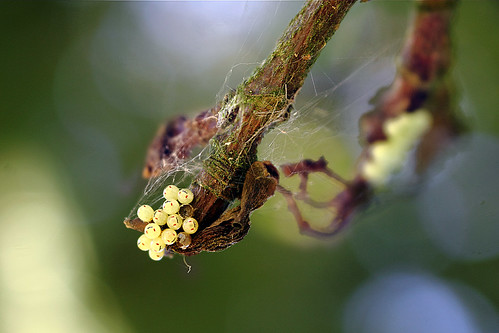 "Unbekannte Insekteneier (4) • <a style=""font-size:0.8em;"" href=""http://www.flickr.com/photos/69570948@N04/29214369486/"" target=""_blank"">View on Flickr</a>"