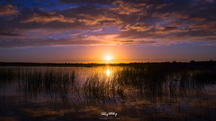 Purple & Gold Sunset (Ray Moloney Photography) Tags: ifttt 500px sunset sun sky clouds water blue summer light lake beautiful trees tree rocks purple orange reeds glow cloud cloudscape
