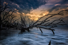 The boneyard (jn3va) Tags: boneyard edisto botanybay sc ocean dead tree seascape beach