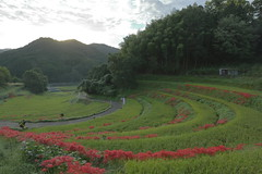 (tsuguakinara) Tags: 5dmk3 canon autumn  eos  5dmark3  nature  nara japan 5d landscape
