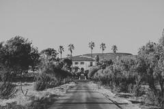 La casa misteriosa (5/365) (pedrobueno_cruz) Tags: white black palm tree house baja california ensenada méxico mistery d7200 nikon photography photographer sun sunset sky colors lines road explored landscape 2016 365 challenge