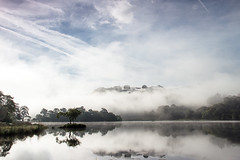 Breaking Hills (loftylion9) Tags: grasmere lakedistrict sunrise mist sunset lonetree tilberthwaite castleriggstonecircle langdalepikes