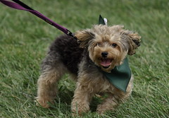 Dog Admission Day, Morton Arboretum. 4 (EOS) (Mega-Magpie) Tags: canon eos 60d outdoors cute puppy dog admission day the morton arboretum lisle il illinois usa america dupage