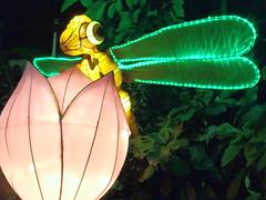 #illuminasia    #autumn (Mr. Happy Face - Peace :)) Tags: illuminations lights lumen lux luz light luce licht  lumire  illuminasia autumn art2016 yyc cowtown