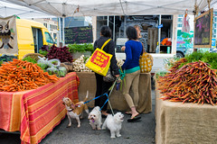 Produce / People / Dogs (-Dons) Tags: woman usa dog austin texas unitedstates tx carrot leash austinfarmersmarket